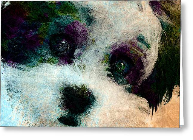Maltese Mixed Media Greeting Cards - Stare Greeting Card by Stacey Chiew