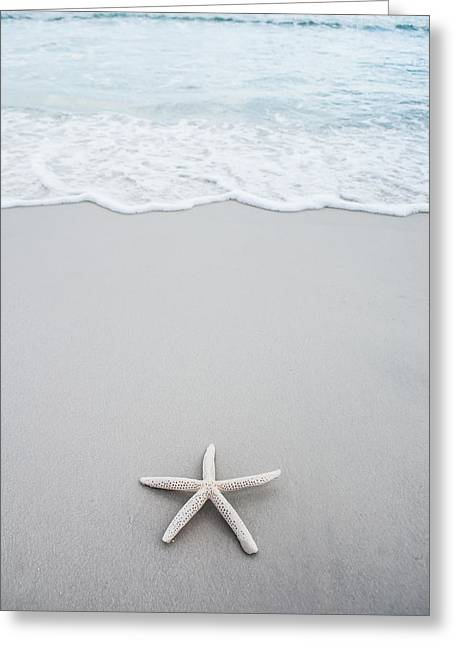 Florida House Greeting Cards - Starfish Findings Greeting Card by Shelby  Young