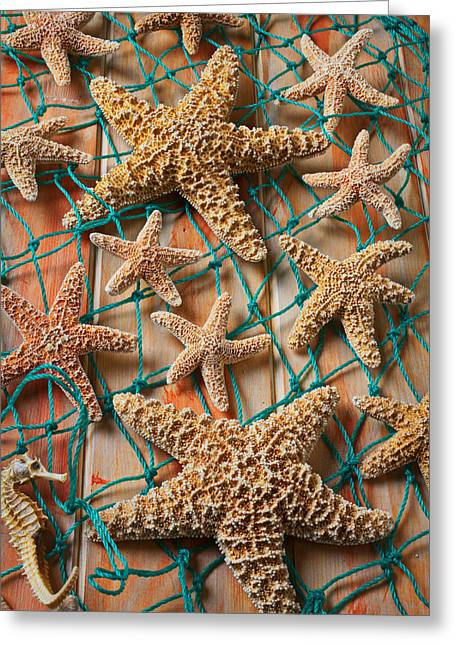 Sea Life Photographs Greeting Cards - Starfish in net Greeting Card by Garry Gay
