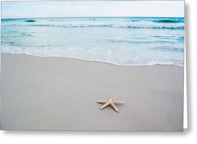 Florida House Greeting Cards - Starfish in Paradise Greeting Card by Shelby  Young