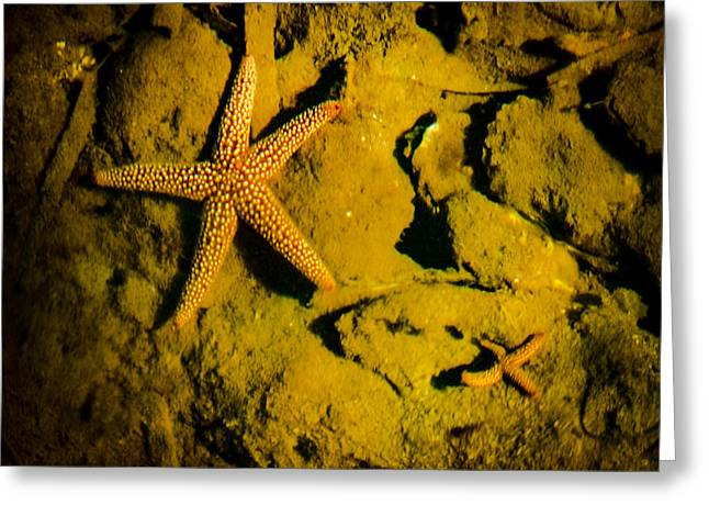 Sealive Photographs Greeting Cards - Starfish lounge Greeting Card by Gene Camarco