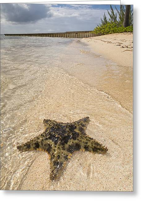 Starfish On The Beach At Starfish Point Greeting Card by Adam Romanowicz