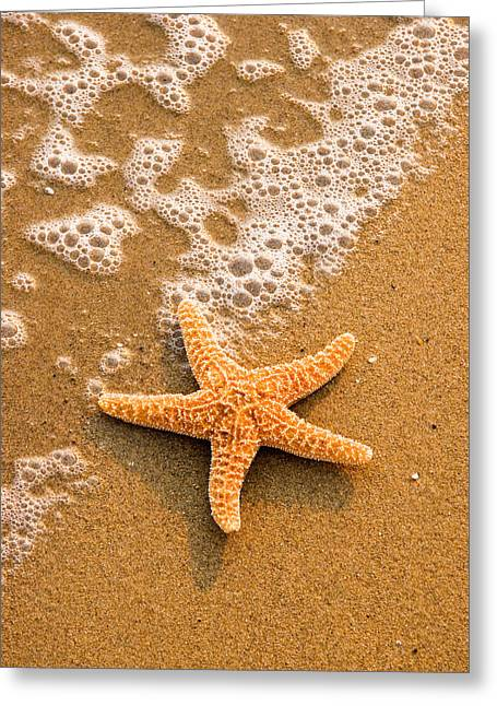 Star Fish Greeting Cards - Starfish on the Beach Greeting Card by Utah Images