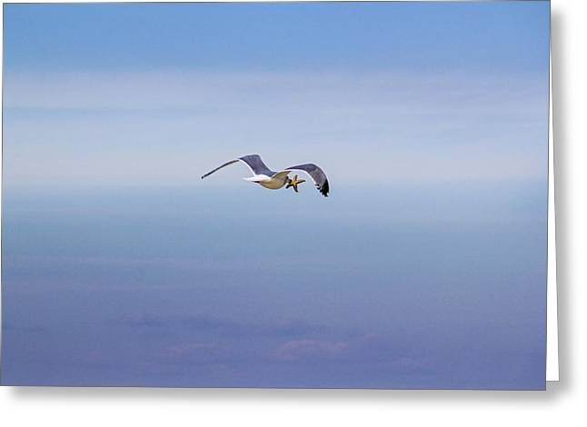 Flying Seagull Greeting Cards - Starfish Snack Greeting Card by Robert Seifert