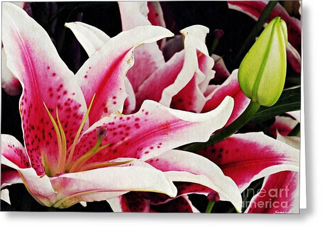 Stargazer Lily Greeting Cards - Stargazer Lilies Greeting Card by Sarah Loft