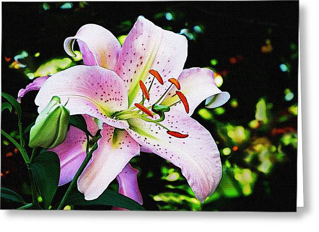 Stargazer Lily Greeting Cards - Stargazer Lily Greeting Card by Marion McCristall