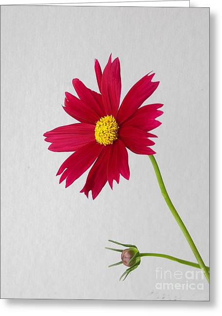 Stark Beauty Greeting Card by Skip Willits