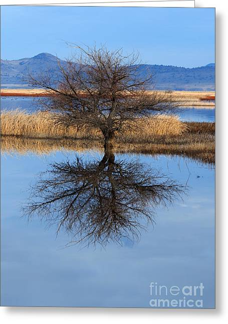 © Beve Brown-clark Greeting Cards - Stark Reflections Greeting Card by Reflective Moments  Photography and Digital Art Images