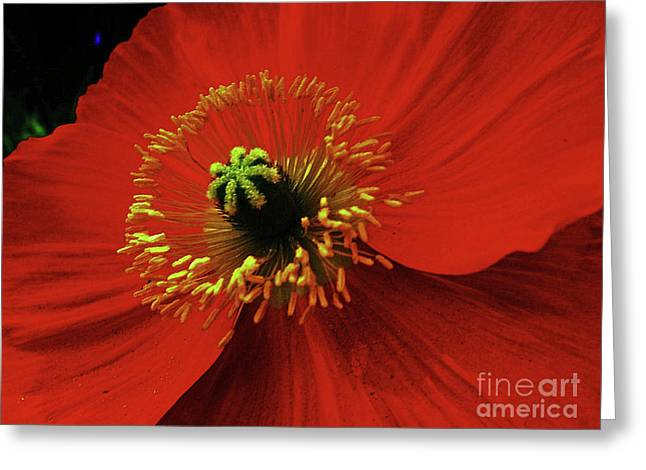 Starlet Greeting Card by Daniele Smith