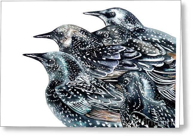 Starlings Greeting Card by Marie Burke