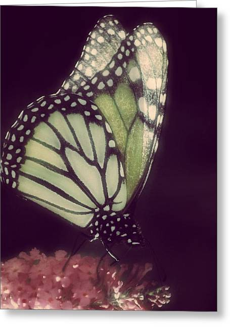 Butterfly Greeting Cards - Starlit Greeting Card by  The Art Of Marilyn Ridoutt-Greene