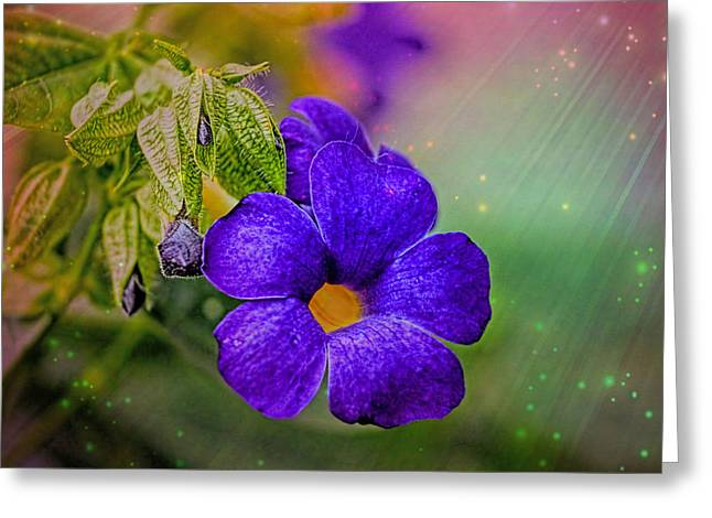 Paint Photograph Greeting Cards - Stars And Flowers Greeting Card by Geraldine Scull