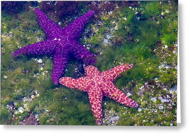 Biology Greeting Cards - Stars Are Out Greeting Card by Randy Hall