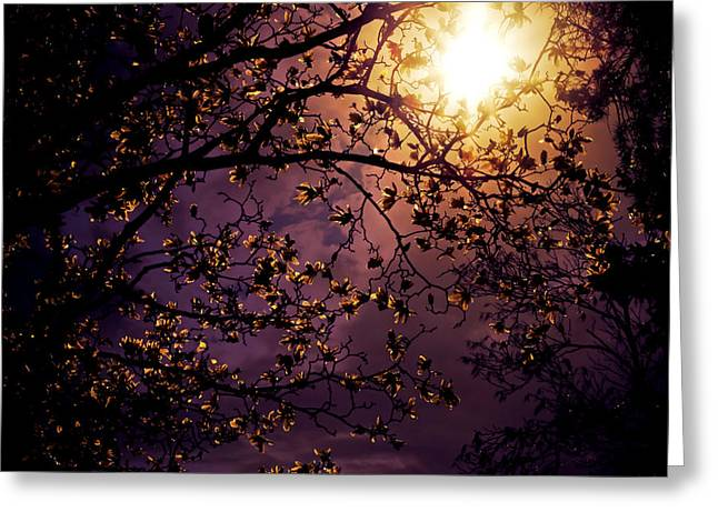 Backlit Greeting Cards - Stars in an Earthly Sky Greeting Card by Vivienne Gucwa