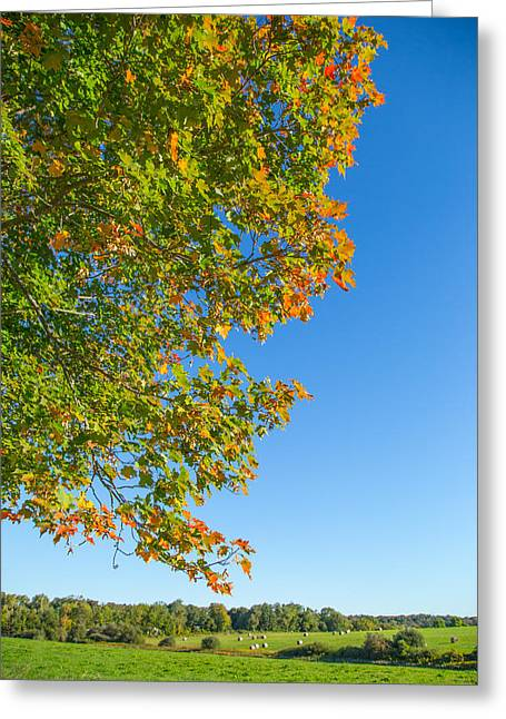 Fall Colors Greeting Cards - Start Of Autumn Greeting Card by Karol  Livote