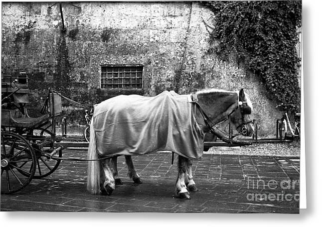 Art In Salzburg Greeting Cards - Staying Warm in Salzburg Greeting Card by John Rizzuto