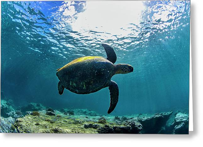 Clarity Greeting Cards - Stealth Turtle Greeting Card by Sean Davey