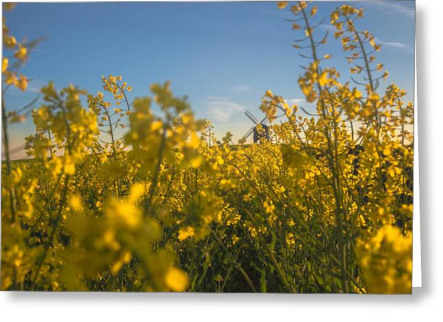 Warwickshire Greeting Cards - Stealthy approach Greeting Card by Chris Fletcher