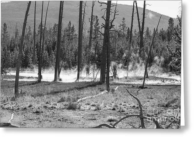 Paint Photograph Greeting Cards - Steam from Below Grayscale Greeting Card by Jennifer White