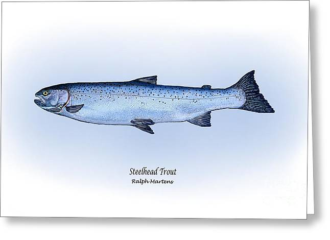 Angling Drawings Greeting Cards - Steelhead Trout Greeting Card by Ralph Martens