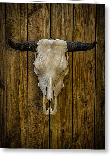 Outbuildings Greeting Cards - Steer Skull Greeting Card by Mike Burgquist