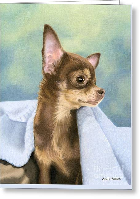 Chihuahua Portraits Greeting Cards - Stella Greeting Card by Sarah Batalka