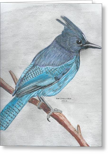 Stellar Drawings Greeting Cards - Stellars Jay Greeting Card by Don  Gallacher