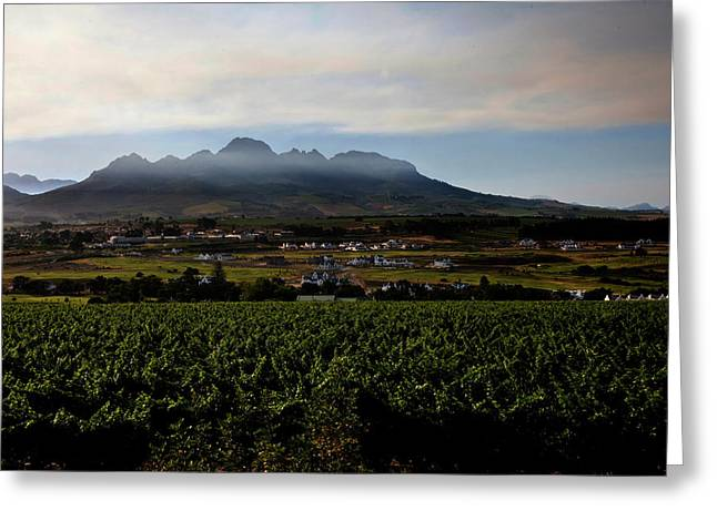 Stellenbosch Vineyard Greeting Card by Dale Halbur