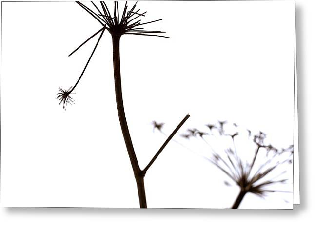 Two Objects Greeting Cards - Stems Greeting Card by Bernard Jaubert
