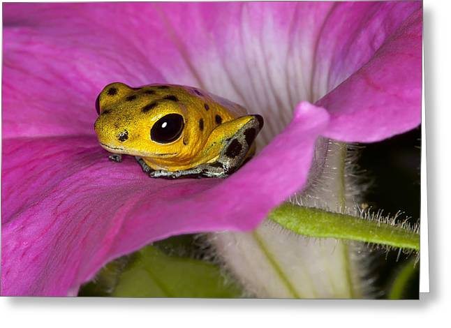 Frogs Photographs Greeting Cards - Stepping Out Greeting Card by Janet Fikar