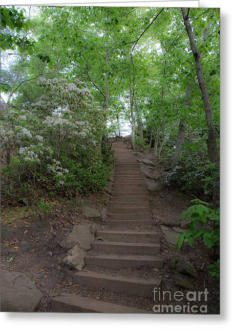 Gastonia Greeting Cards - Steps Greeting Card by Andy Miller