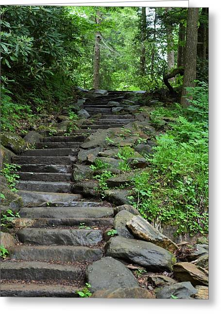 Stepping Stones Greeting Cards - Steps in the Woods Greeting Card by Mark Mitchell
