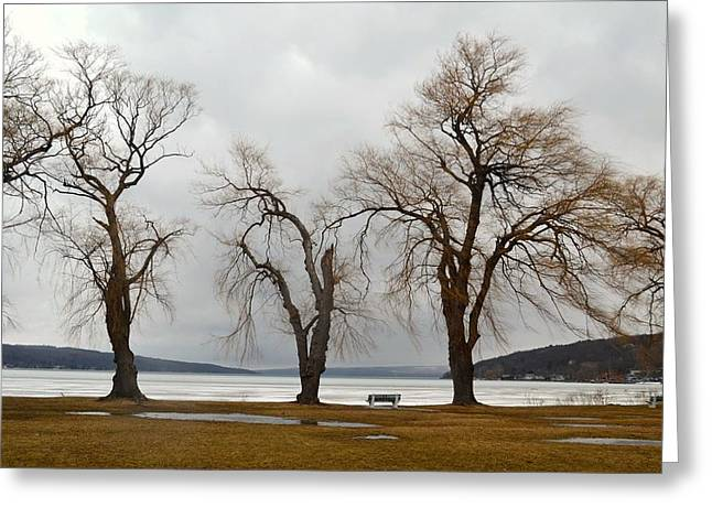 Ithaca Greeting Cards - Stewart Park Winter Willows Greeting Card by Linda Wyatt