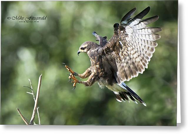 Kite Greeting Cards - Sticking the Landing Greeting Card by Mike Fitzgerald