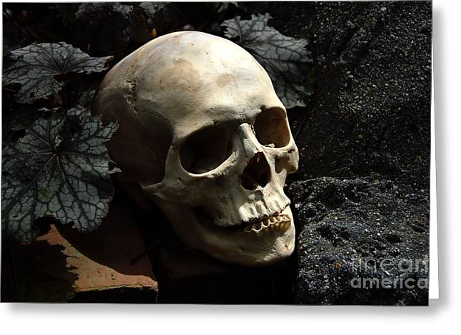 Human Skull Greeting Cards - Still Life Greeting Card by Wayne Higgs