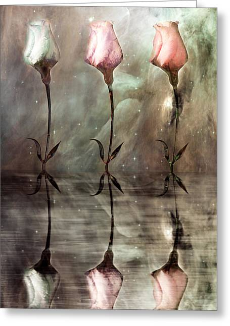 Trio Greeting Cards - Still Greeting Card by Photodream Art