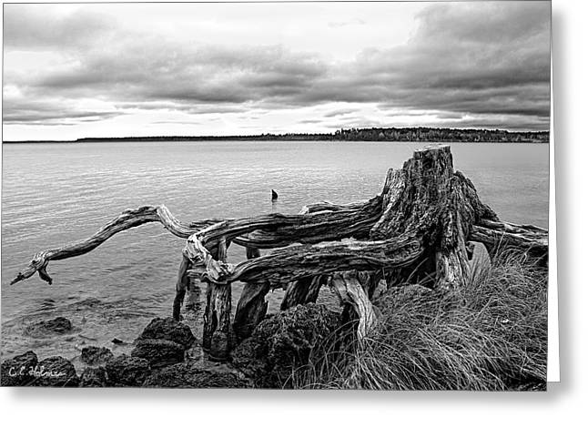 Christopher Holmes Greeting Cards - Still Reaching Out - B-W Greeting Card by Christopher Holmes