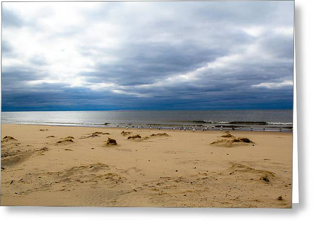 Grey Clouds Greeting Cards - Still Sea and Gulls Greeting Card by Donna Fonseca Newton