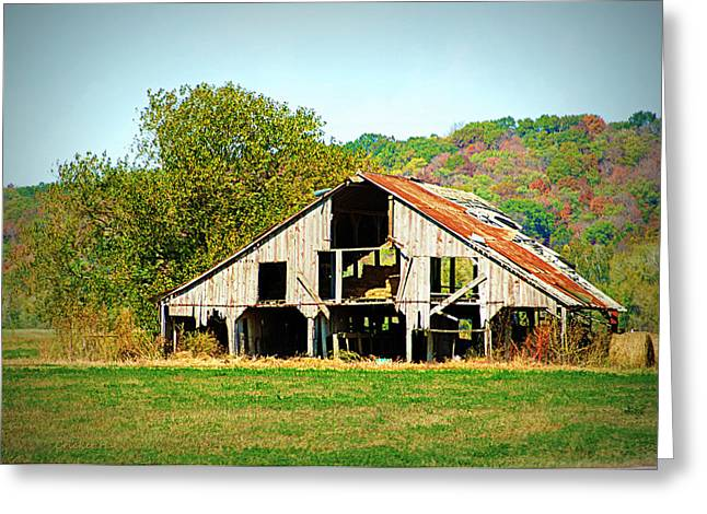 Hartsburg Greeting Cards - Still Standing Greeting Card by Cricket Hackmann
