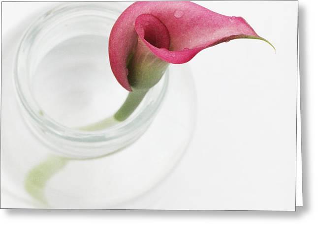 Stillness Greeting Card by Amanda Barcon