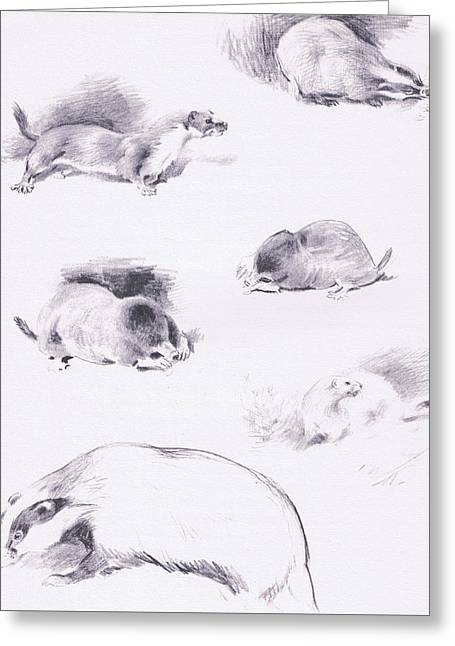 Stoat, Weasel, Badger And Mole Greeting Card by Archibald Thorburn