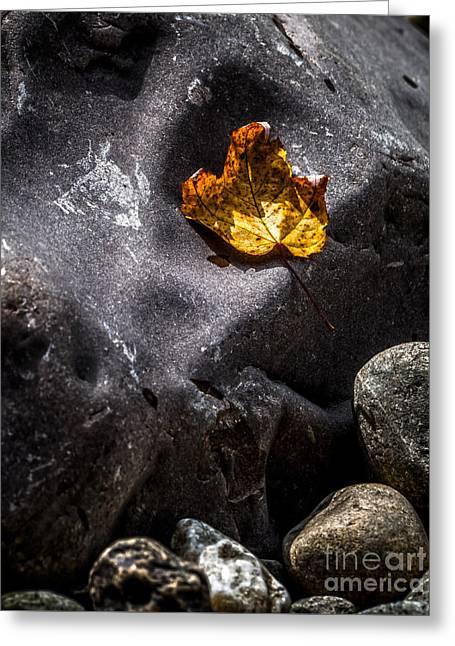 Gunmetal Greeting Cards - Stone and Orange Leaf Greeting Card by James Aiken