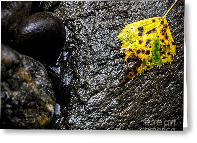 Gunmetal Greeting Cards - Stone and Yellow Leaf Greeting Card by James Aiken