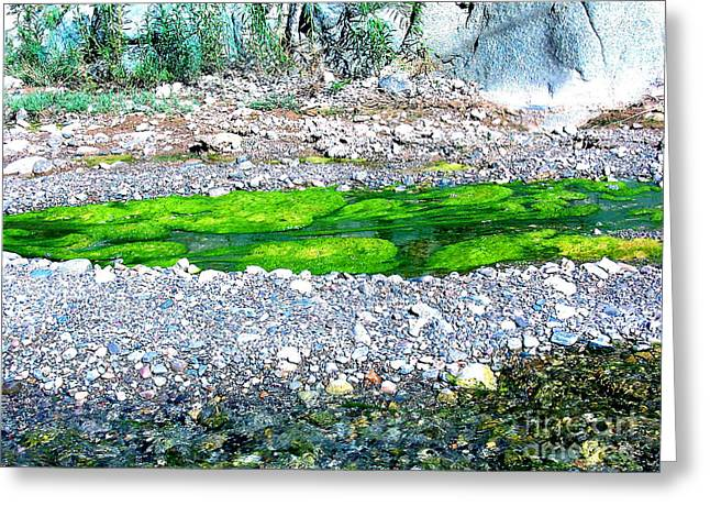 Alga Greeting Cards - Stones and Algae on the Edge of the Colorado River Greeting Card by Merton Allen
