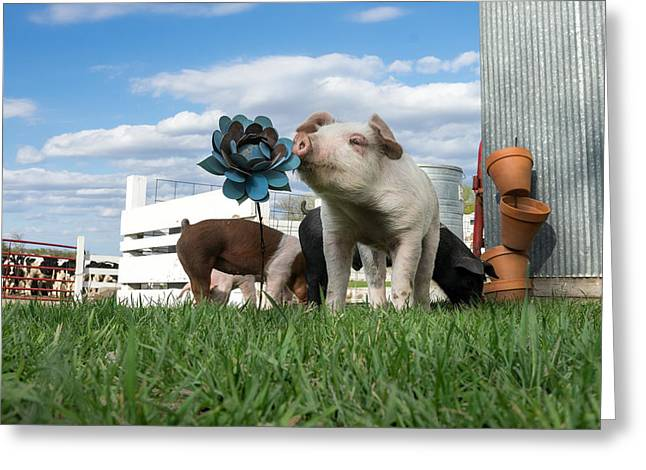 Piglets Greeting Cards - Stop And Smell The Flowers Greeting Card by Lorianne Ende