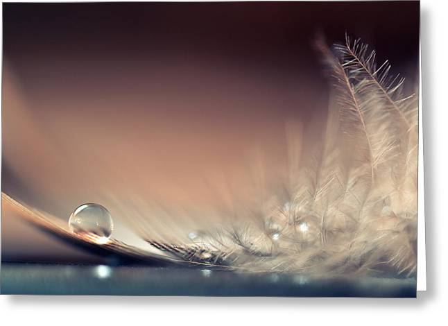 Macro Greeting Cards - Stories Of Drops Greeting Card by Dmitry.d