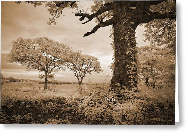 Ir Photography Greeting Cards - Stories of Old Greeting Card by Mike Irwin
