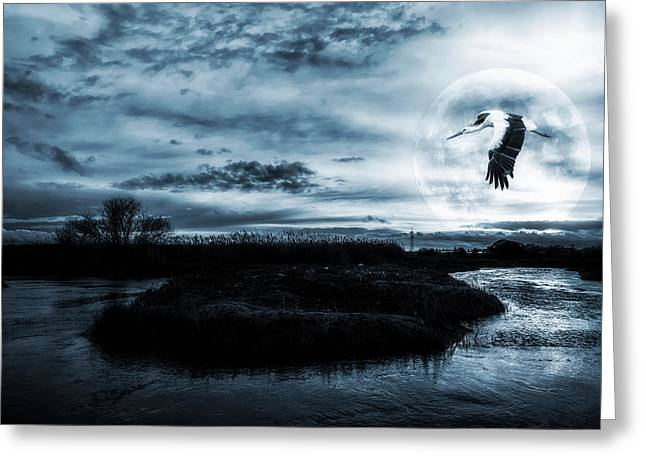 Dark Water Greeting Cards - Stork in Moonlight Greeting Card by Jaroslaw Grudzinski