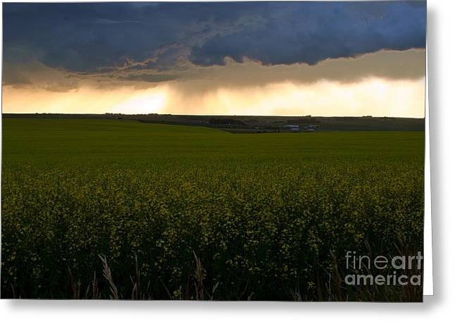 Storm Over The Canola Fields Greeting Card by Mario Brenes Simon