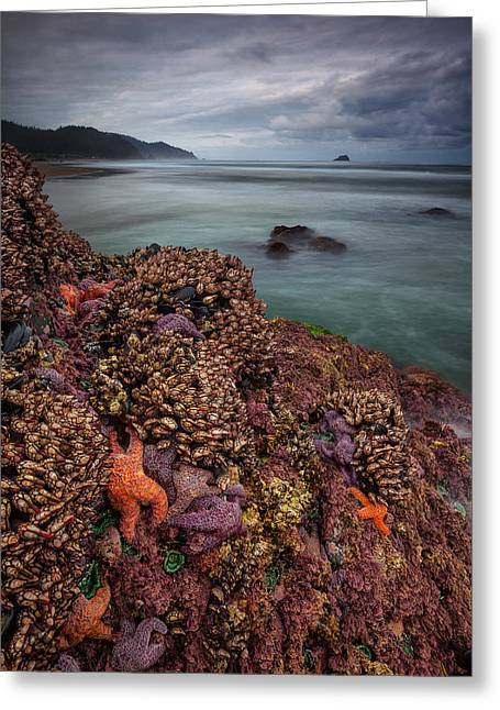 Pacific Ocean Prints Greeting Cards - Stormy Life at Sea Greeting Card by Darren  White